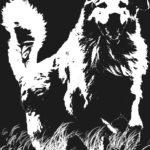 koirakurssit koirakoulu koiran kasvatus