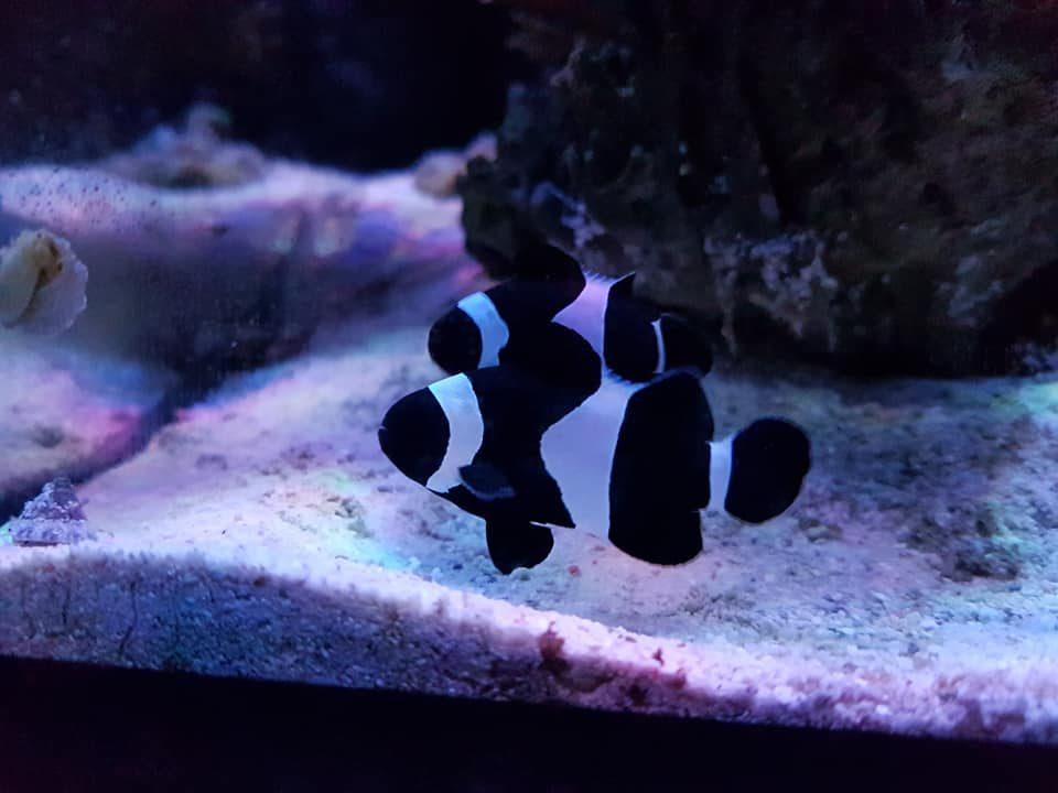 kalat akvaario oulu